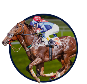 Live Horse Racing Data Feeds
